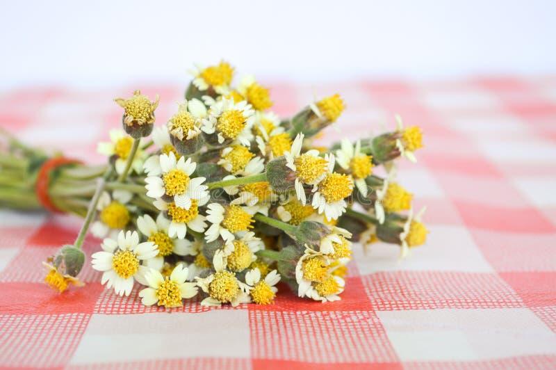 Цветок Coatbuttons на скатерти стоковое фото rf