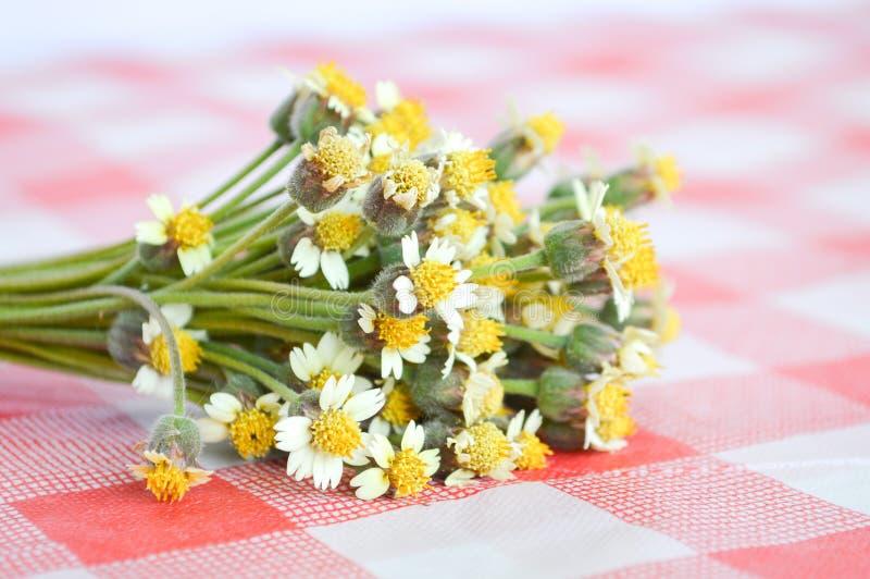 Цветок Coatbuttons на скатерти стоковое изображение rf