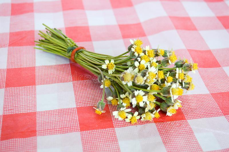 Цветок Coatbuttons на скатерти стоковые фотографии rf