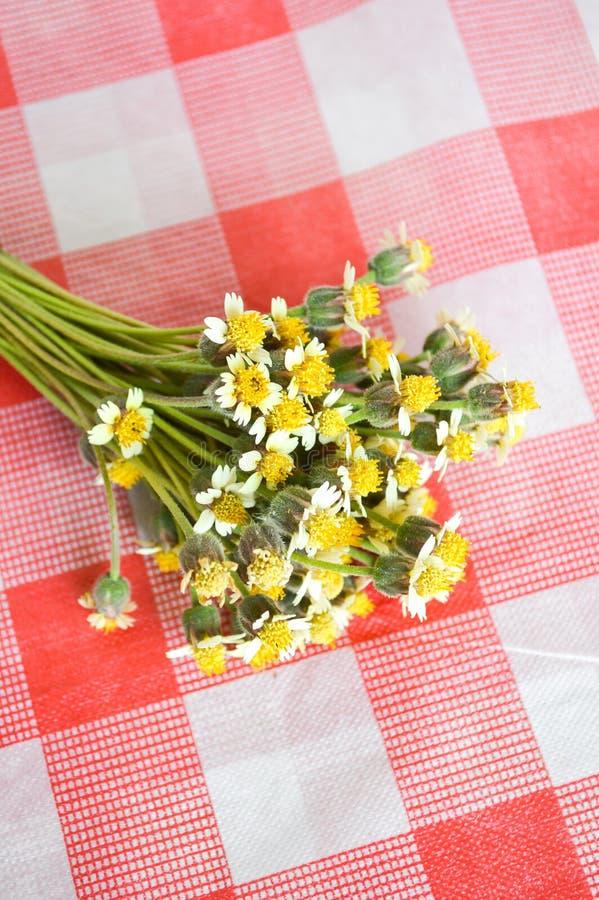 Цветок Coatbuttons на скатерти стоковые изображения