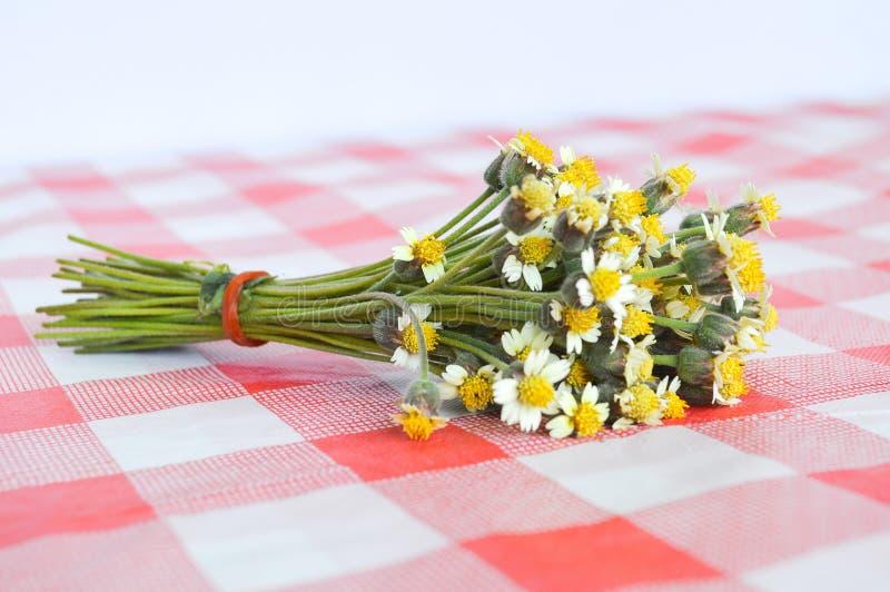 Цветок Coatbuttons на скатерти стоковое изображение