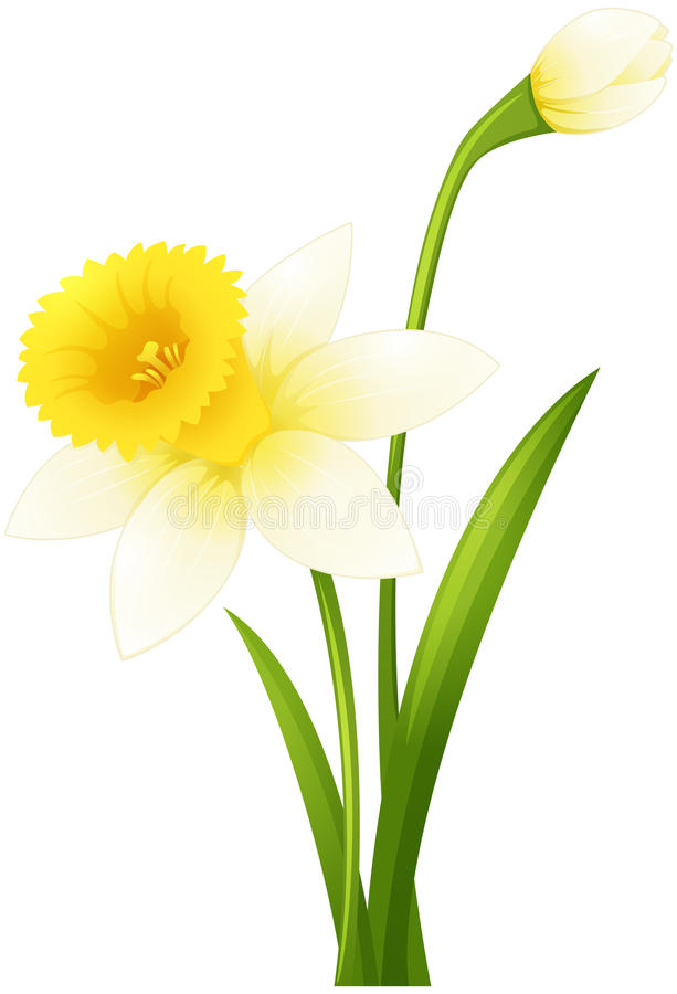 Цветок Daffodil на зеленом стержне иллюстрация штока