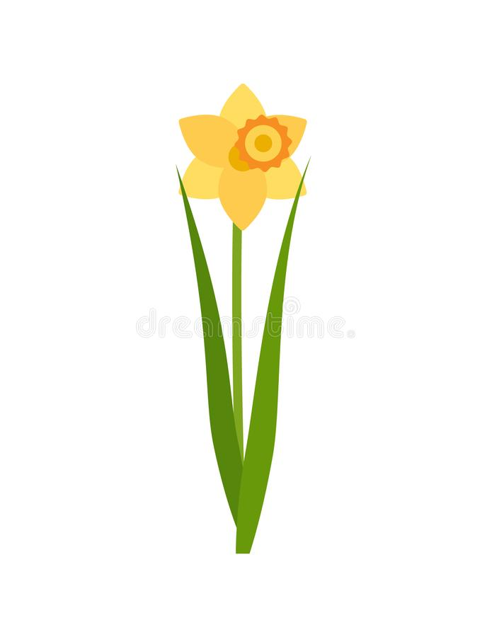 Цветок Daffodil с зелеными конюшней и листвой иллюстрация штока