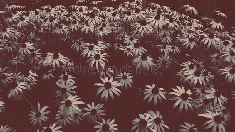 Цветок desaturated стоковое изображение rf