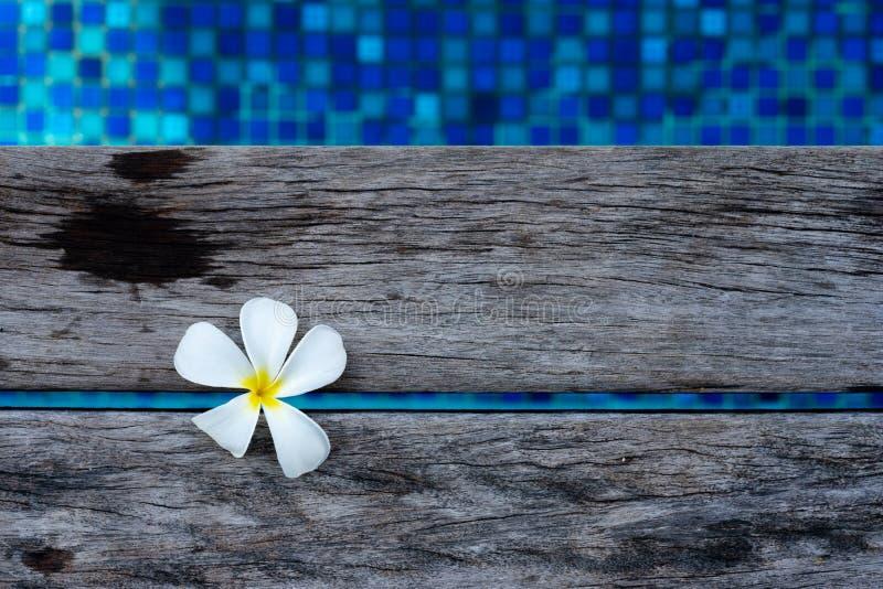 Цветок Frangipani плавая на деревянную плиту бассейном стоковое изображение rf