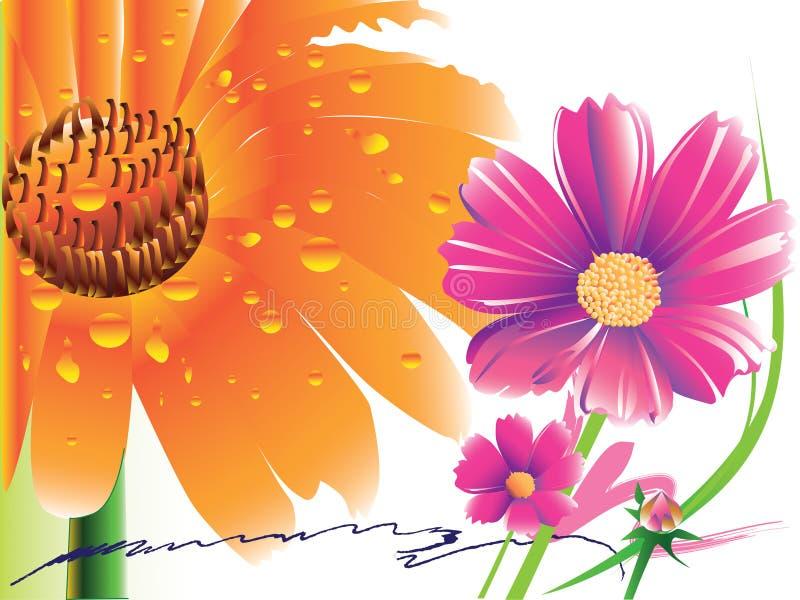 Цветок gerbera маргаритки иллюстрация штока