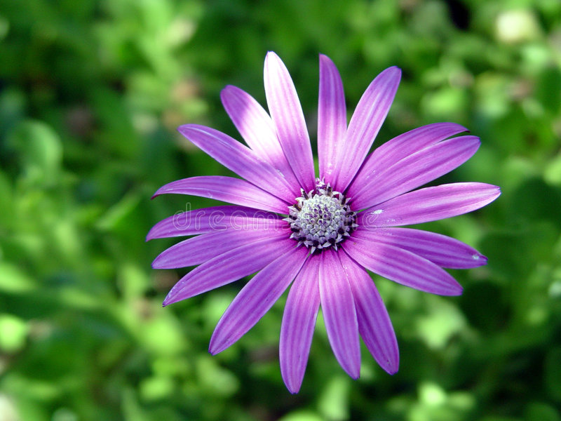 цветок i стоковая фотография rf