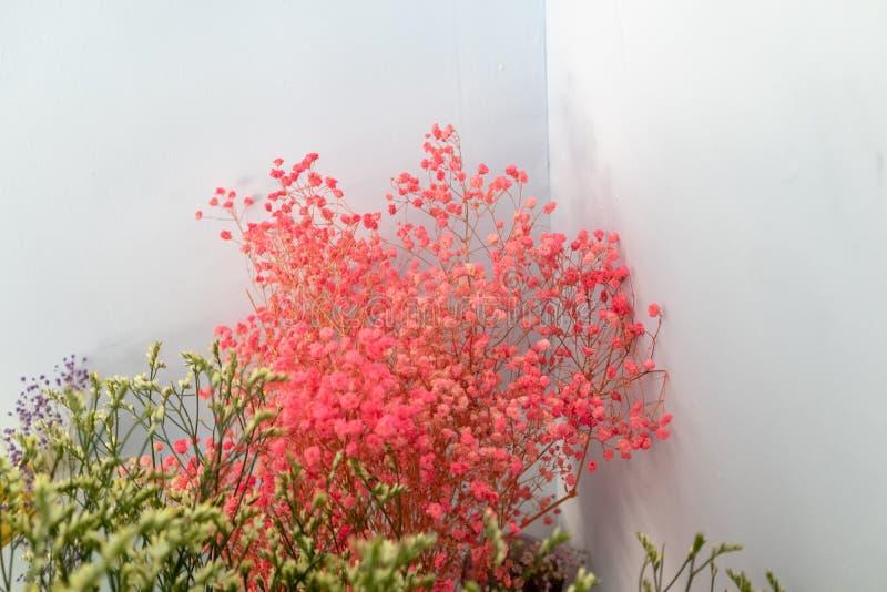 цветок Plumbaginaceae-отрезка стоковые фотографии rf