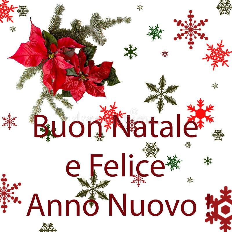 Цветок Poinsettia красный с елью и снег на белой предпосылке Рождественская открытка приветствиям открытка christmastime Красное  иллюстрация вектора