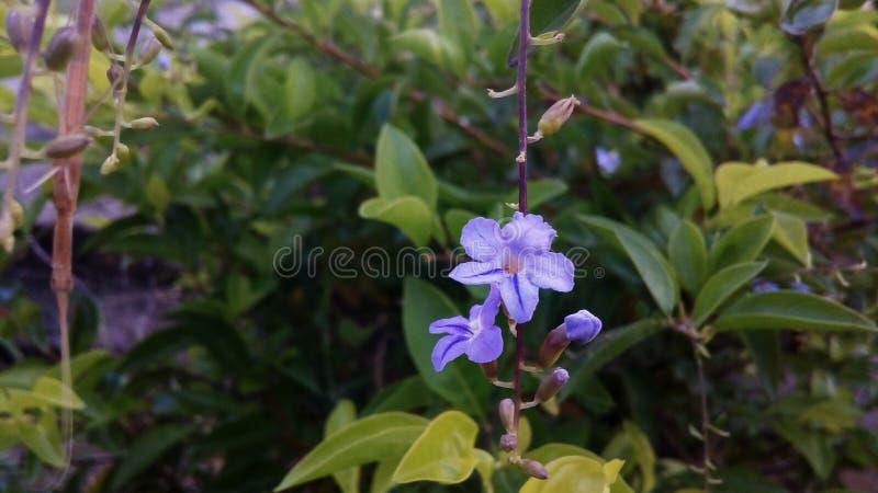 Цветок Purpule Природа Листья Справочная информация они стоковое фото rf