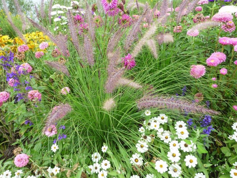 Цветок Serie стоковое изображение