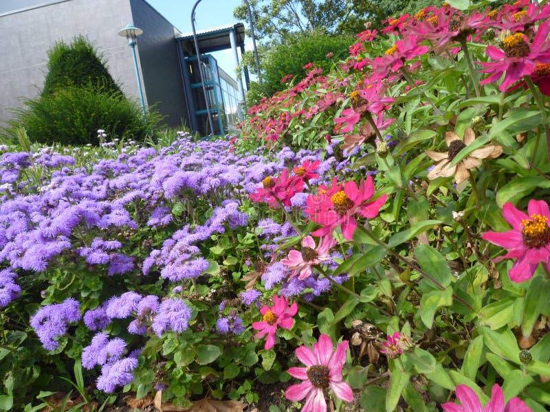 Цветок Serie стоковое фото rf