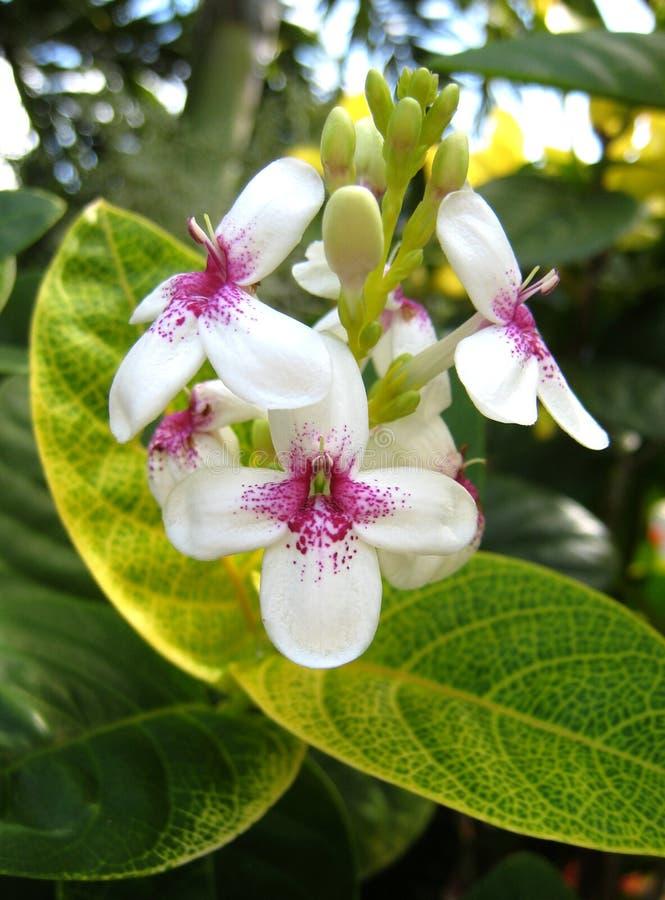 цветок shrub2 стоковое фото rf