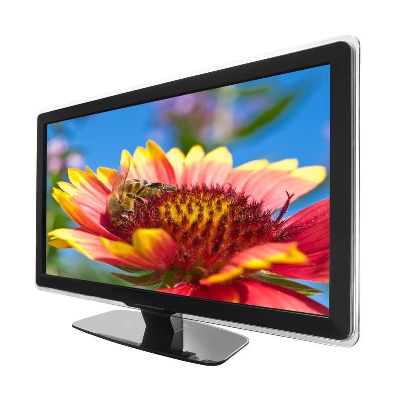 цветок tv стоковая фотография