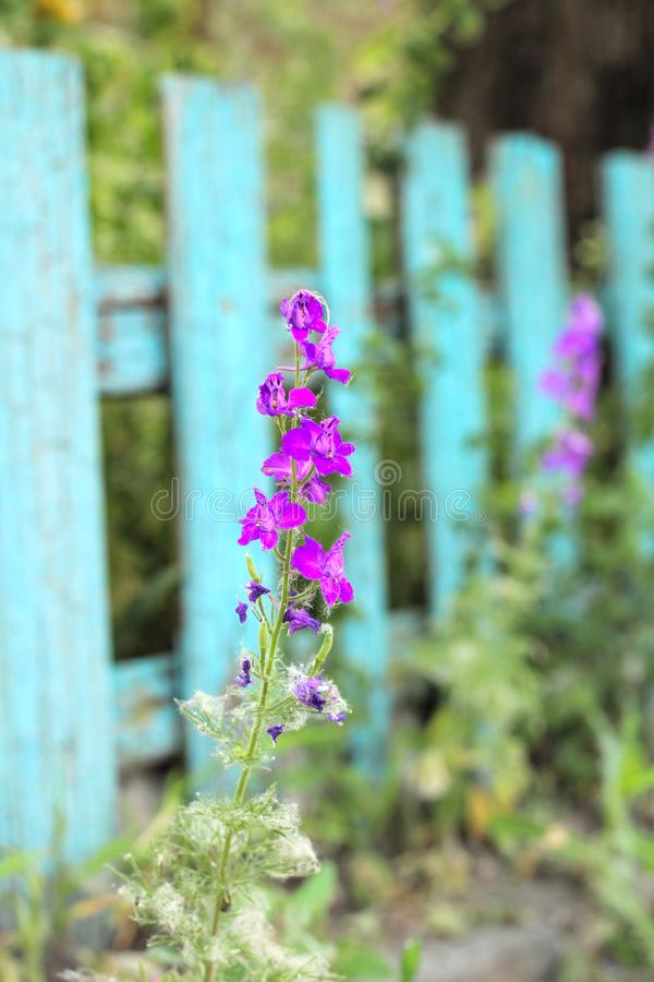 Цветорасположение розовых цветков на предпосылке стоковое изображение rf