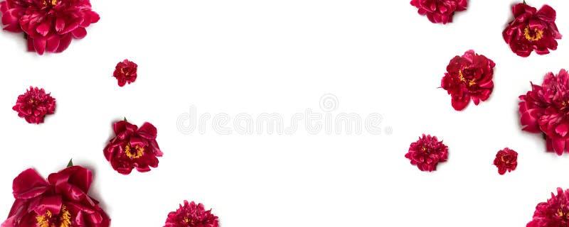 Цветочная композиция пиона Цветочный узор красных цветков пиона на белой предпосылке стоковые изображения