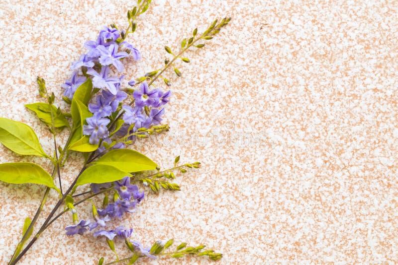 Цветочная композиция природы текстуры предпосылки пурпурная плоско кладет стиль на плитку стоковые фотографии rf