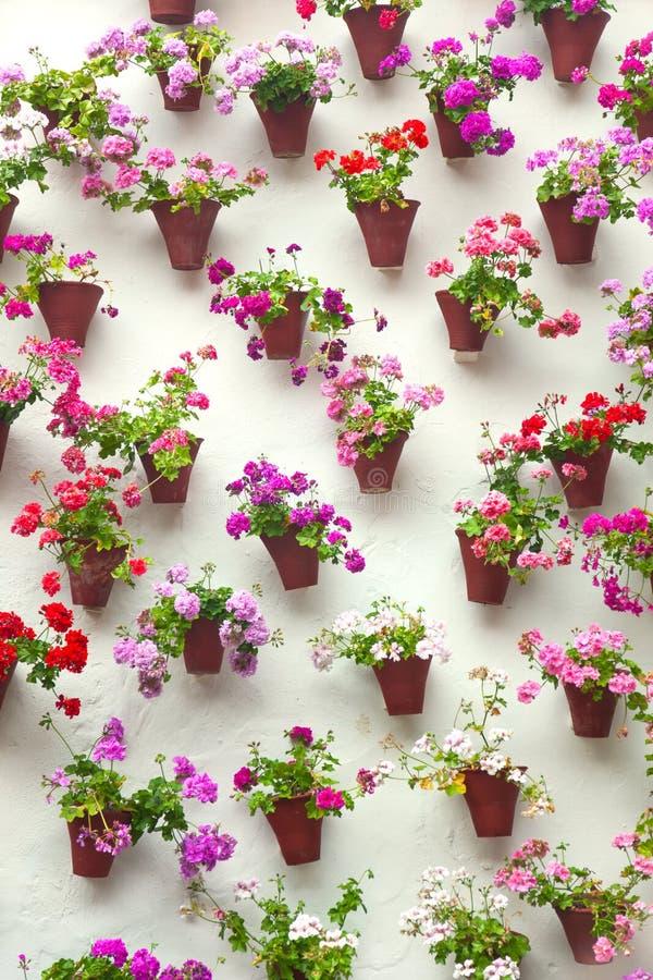 Download Цветочные горшки и красочный цветок на белой стене, старый европеец к Стоковое Изображение - изображение насчитывающей анданте, история: 37927301