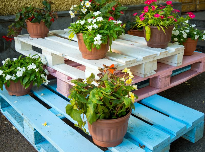 Цветочные горшки стоят на деревянных паллетах покрашенных в других цветах стоковые фото