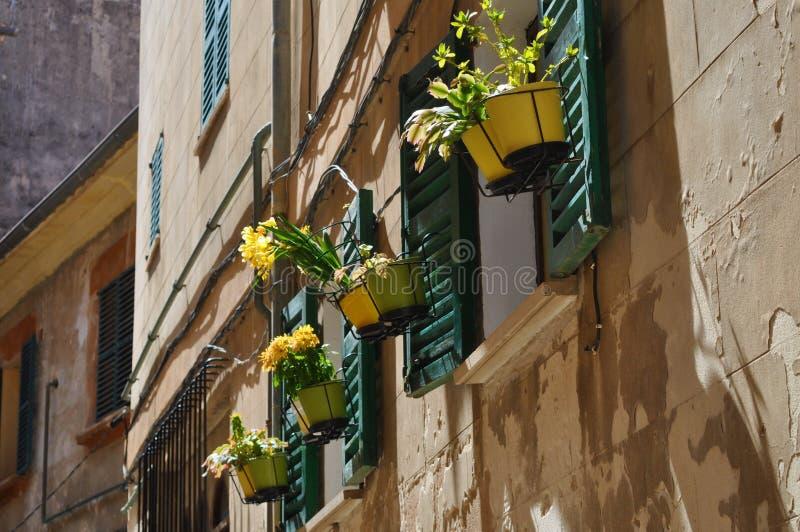 Цветочные горшки Narcis в окнах в Palma Мальорке стоковые фото