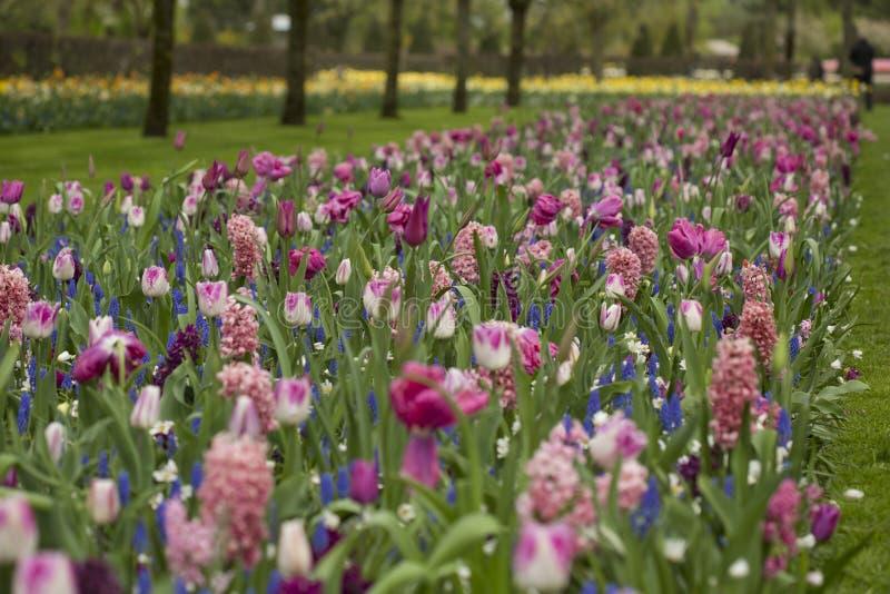 Цветочный сад весной стоковое фото