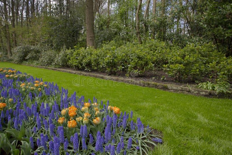 Цветочный сад весной стоковые фотографии rf