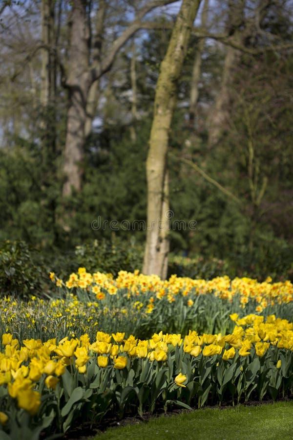 Цветочный сад весной стоковые фото