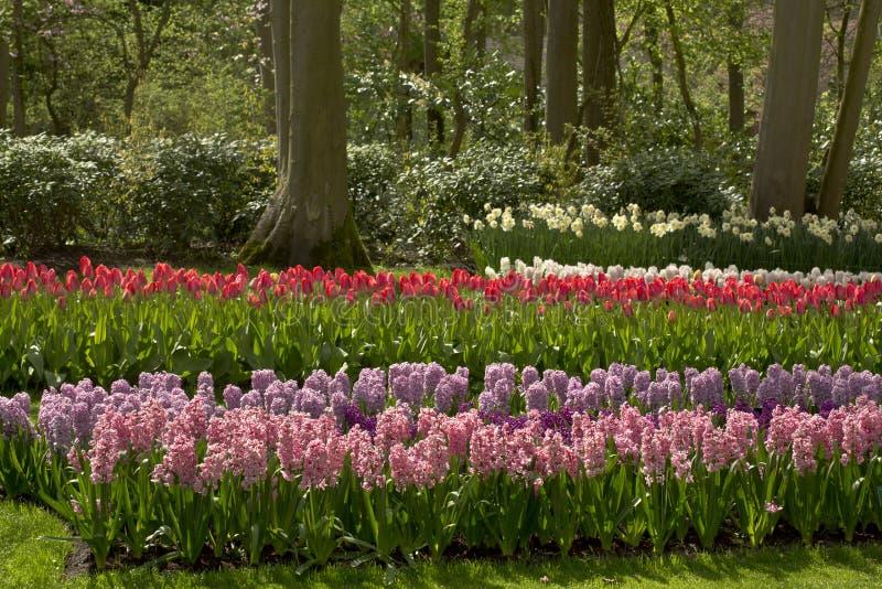 Цветочный сад весной стоковое изображение rf