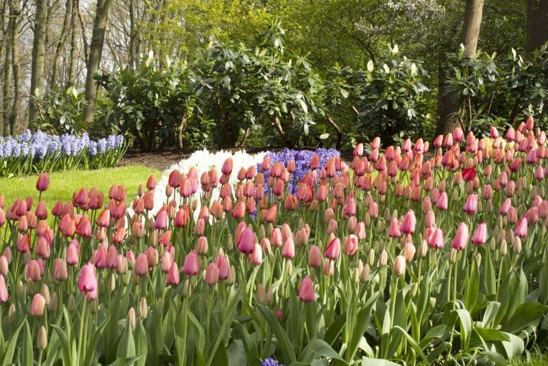 Цветочный сад весной стоковое изображение