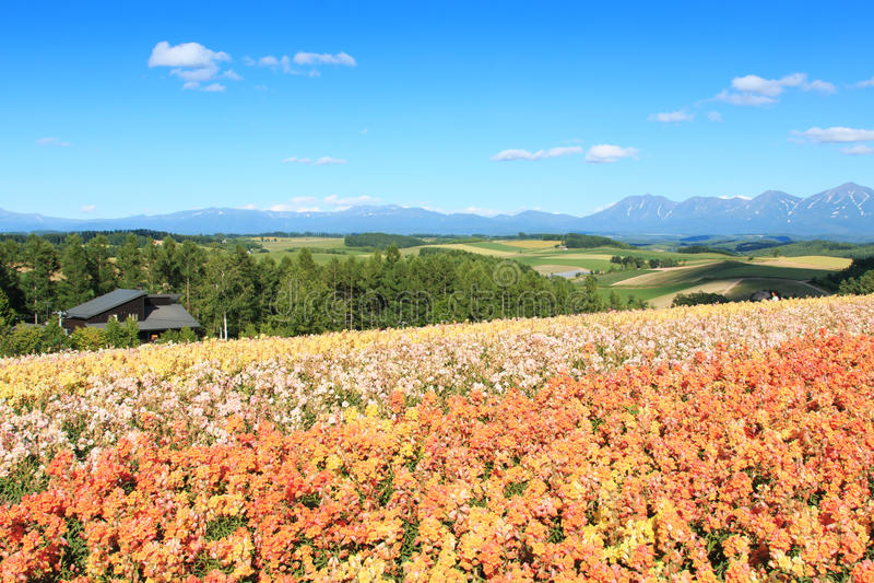 Цветочный сад в Kamifurano, с горным видом в Furano, Хоккаидо Япония стоковые фото