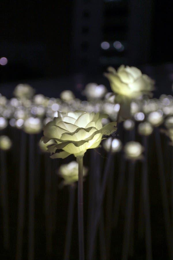 Цветочный сад СИД стоковые изображения