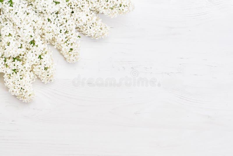 Цветочный узор белых ветвей сирени, предпосылка цветков o r стоковое изображение