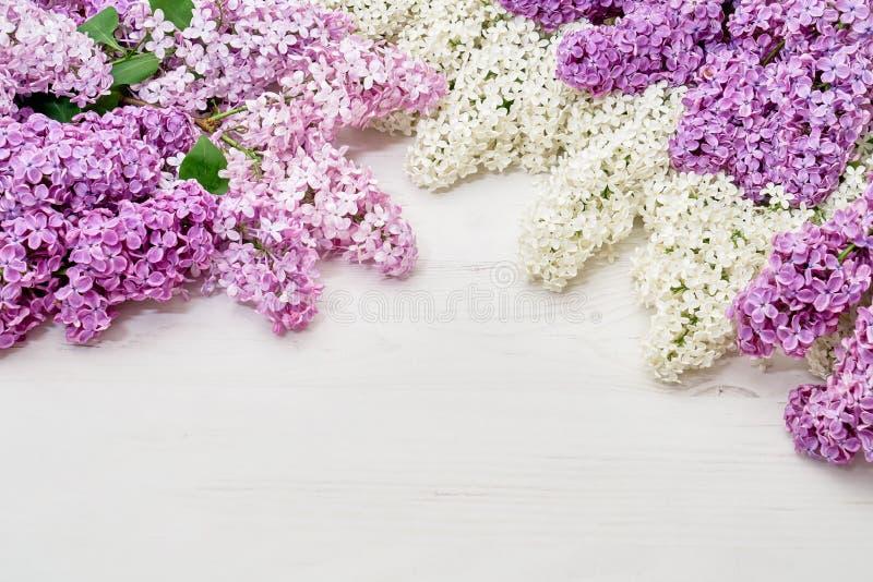 Цветочный узор белых розовых ветвей сирени, предпосылка цветков o стоковые фотографии rf
