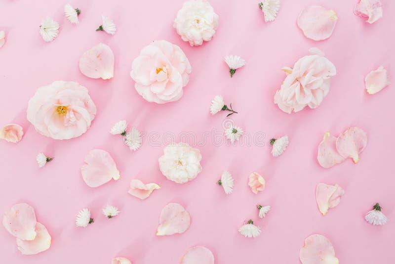 Цветочный узор белых роз на розовой предпосылке Плоское положение, взгляд сверху стоковые изображения rf