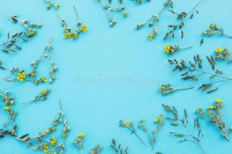 Цветочный узор белых wildflowers, зеленых листьев, ветвей на голубой предпосылке, космосе для текста в центре Квартира, верхняя ч стоковая фотография