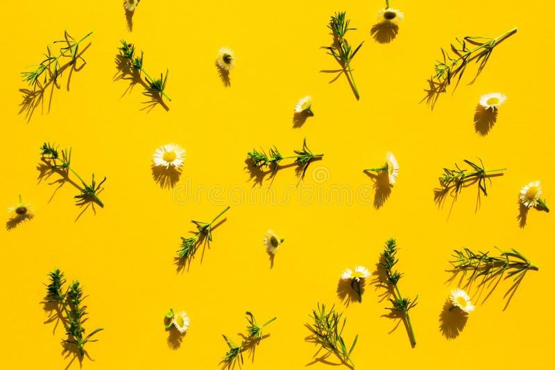 Цветочный узор белых wildflowers, зеленых листьев, ветвей на желтой предпосылке, плотных теней Квартира, взгляд сверху Цветок стоковая фотография