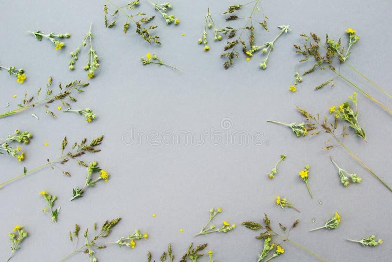 Цветочный узор белых wildflowers, зеленых листьев, ветвей на серой предпосылке, космосе для текста в центре Квартира, верхняя час стоковая фотография