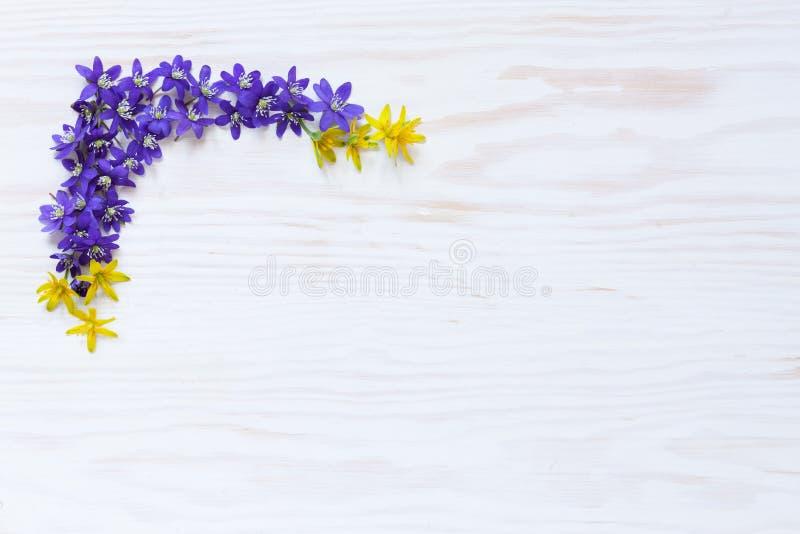 Цветочный узор весны со свежими фиолетовыми цветками hepatica на белой деревянной предпосылке стоковые фото
