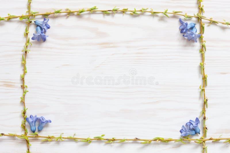 Цветочный узор весны со свежим голубым цветком гиацинта на белой деревянной предпосылке стоковая фотография rf