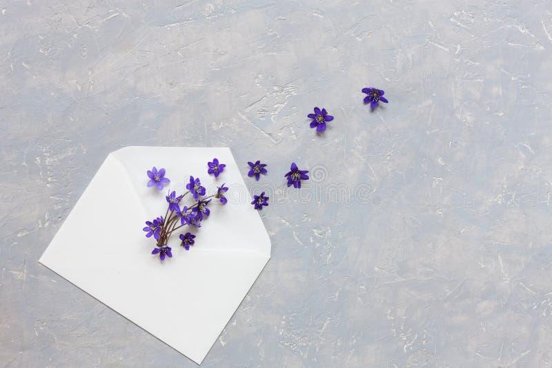Цветочный узор весны со свежим голубым цветком hepatica в белом конверте н стоковое изображение rf