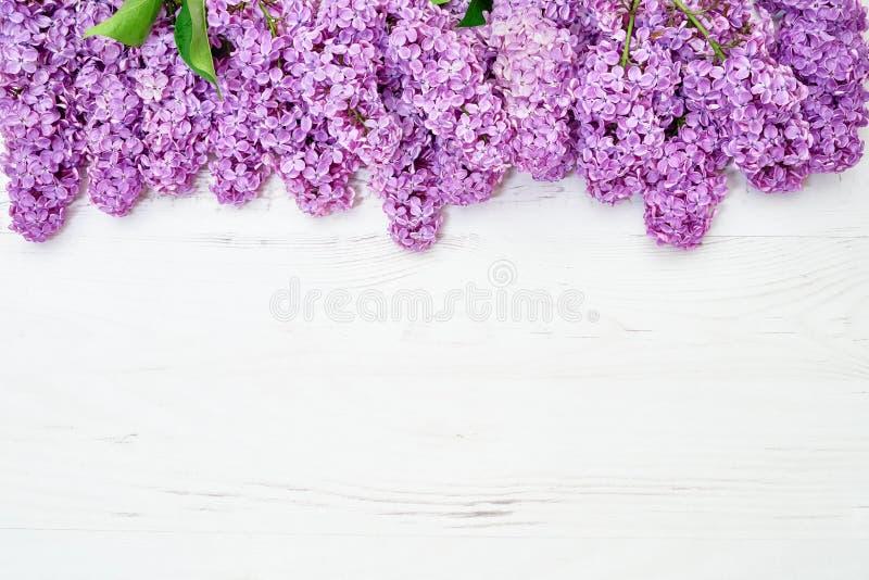Цветочный узор ветвей сирени, предпосылка цветков o стоковое фото