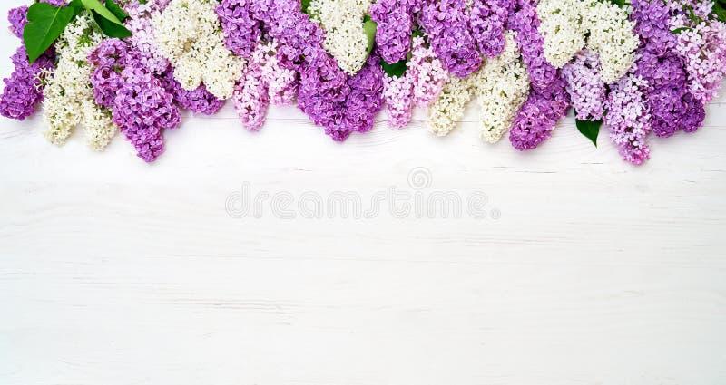 Цветочный узор ветвей сирени, предпосылка цветков o стоковая фотография rf
