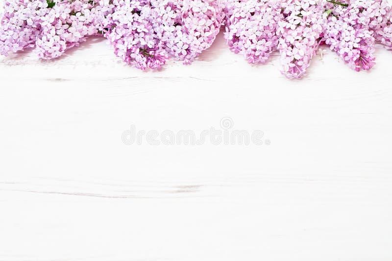 Цветочный узор ветвей сирени, предпосылка цветков o r стоковое изображение