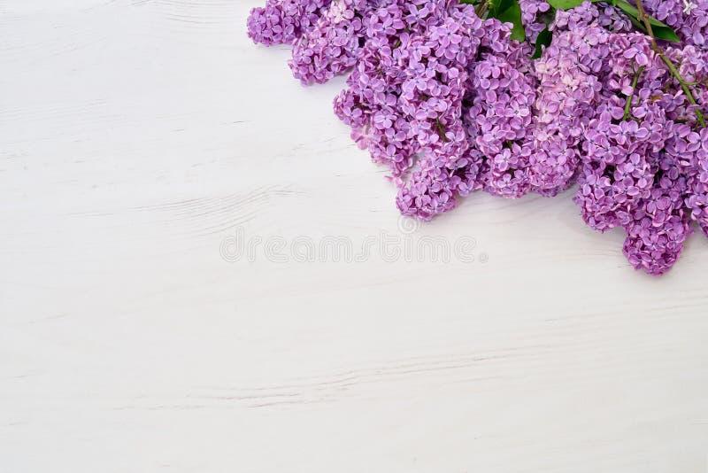 Цветочный узор ветвей сирени, предпосылка цветков o r стоковые изображения