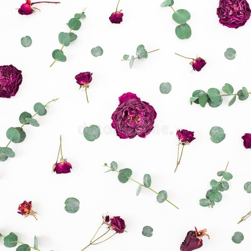 Цветочный узор высушенных красных цветков и ветвей эвкалипта на белой предпосылке r стоковое фото rf
