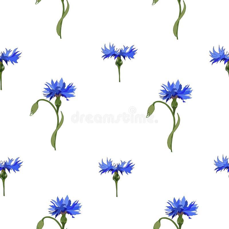 Цветочный узор голубых cornflowers на белой предпосылке Орнамент вектора безшовный для украшения тканей, плиток, бумаги иллюстрация штока