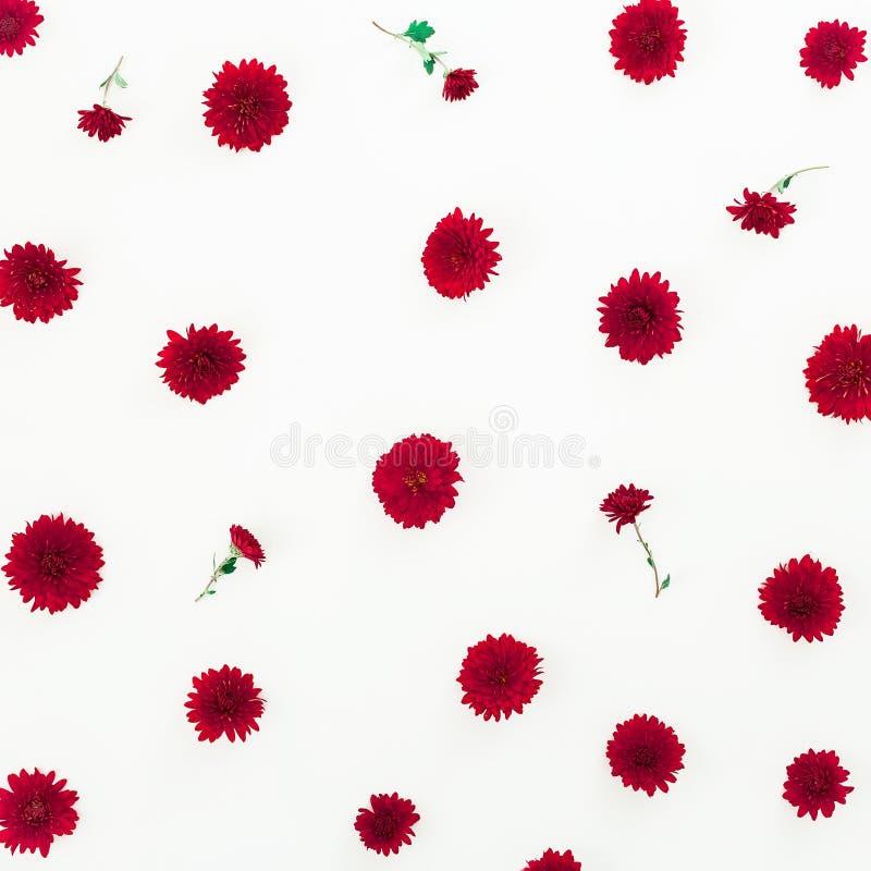 Цветочный узор красных изолированных цветков на белой предпосылке Плоское положение, взгляд сверху стоковое фото rf