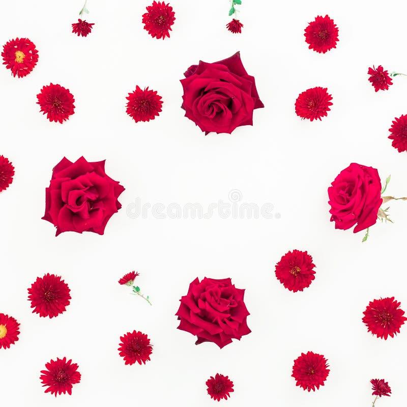 Цветочный узор красных изолированных цветков на белой предпосылке Плоское положение, взгляд сверху стоковое изображение rf