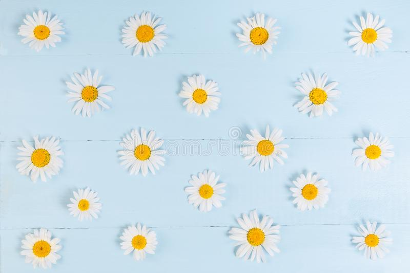 Цветочный узор лета с цветком стоцвета над зеленоголубой винтажной деревянной предпосылкой стоковое изображение