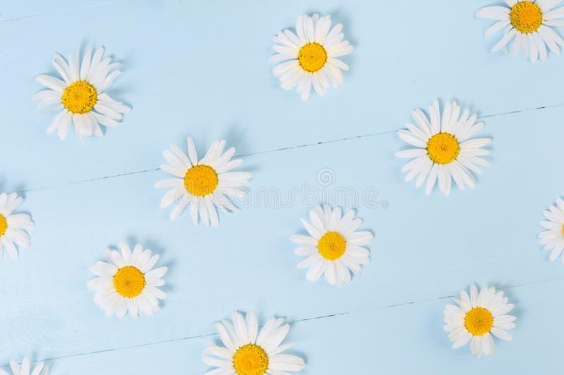 Цветочный узор лета с цветком стоцвета над зеленоголубой винтажной деревянной предпосылкой стоковые изображения rf